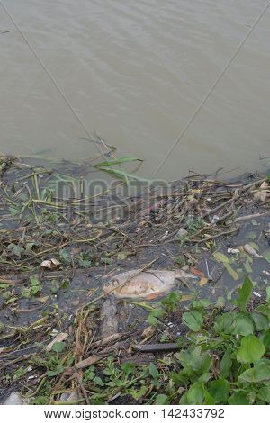 Garbage floating in river, Water pollution. Ecological problem, background