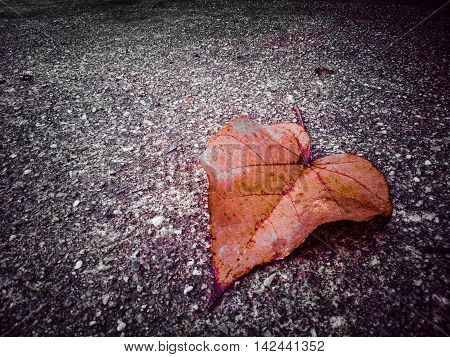 Leaf falling on the street Background Autumn