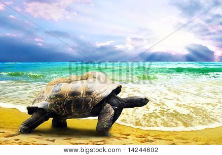 Big Turtle on the tropical oceans beach