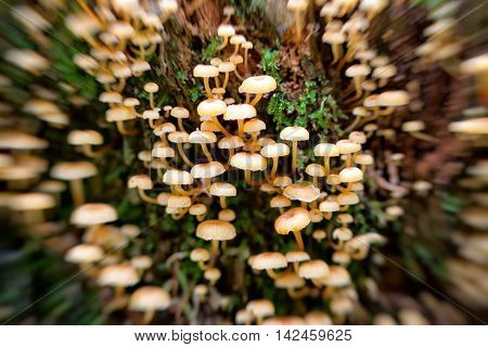 Abstract imge of the poisoning inedible mushrooms