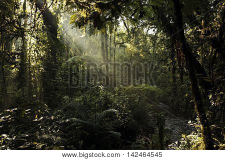 Sunrays Breaking through the Leaves of Bwindi Impenterable National Park Uganda