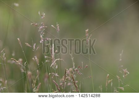 Arty Grass Background Pattern In A Meadow