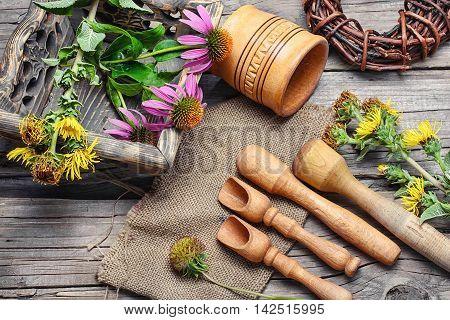 Curative Echinacea And Inula