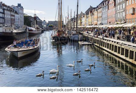 COPENHAGEN, DENMARK - JULU 21: Mute swan brood and people in Nyhavn, Copenhagen at July 21, 2016