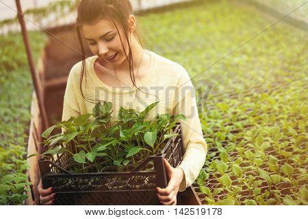 Farmer Girl Holding A Box Of Green Seedlings In Greenhouse
