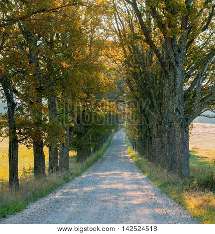 Autumnal landscape with countryside road among old oaks, Europe