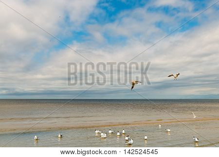 Sandy beach in Jurmala - famous international Baltic resort in Latvia