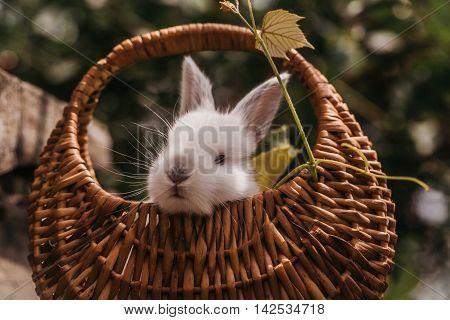 Funny Little Rabbit Bunny