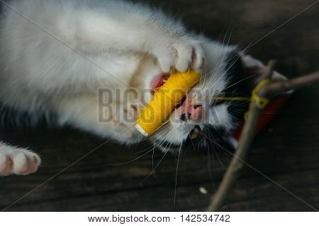cute small lovely curious baby cat or kitten with white color spotted fur and whiskers playing with thread on twig on wooden background outdoor