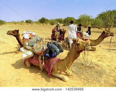 Jaisalmer, India-february 18: Unidentified People Stand Near Camels During Safari On February 18, 20