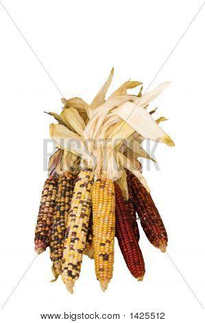 Bundle Of Indian Corn