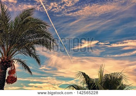 Fighter aircraft fuel trace in the dramatic turkish sky over palm tree.Toned image.