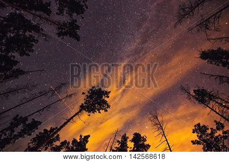 Night sky with stars and trees in summer forest. One Perseid trail