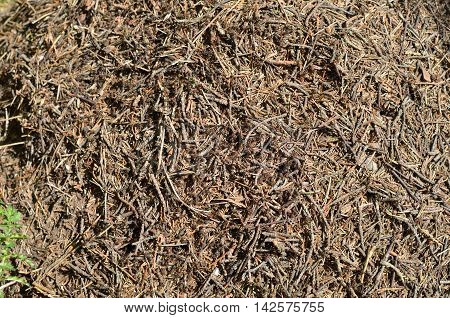 Closeup of an anthill with lot of big bustle ants
