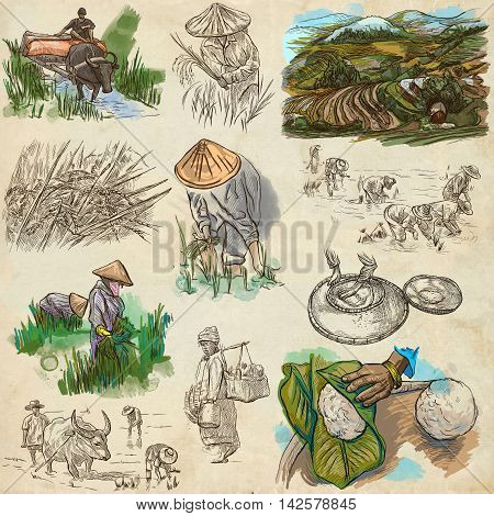 Agriculture - Life of a farmer. RICE crop. Collection of an hand drawing illustrations. Set of freehand sketches on paper.