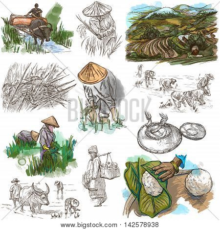 Agriculture - Life of a farmer. RICE crop. Collection of an hand drawing illustrations on white.