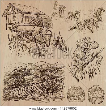 Agriculture - Life of a farmer. RICE crop. Collection of an hand drawn vector illustrations. Set of freehand sketches.