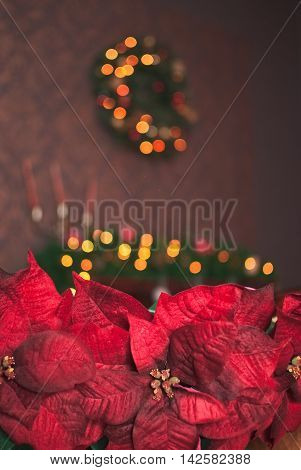 Christmas red poinsettia and yellow garland background