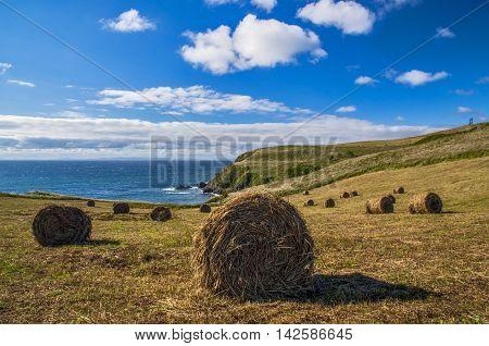 Rick (bales) of hay near the coast