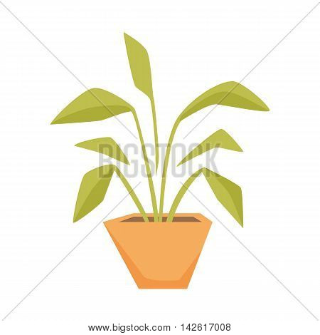 Drimiopsis, Dieffenbachia, Syngonium in pot. Interior home and office potted plant. Houseplant cartoon vector illistration. Interior decoration. Flowerpot drowth and gardening.