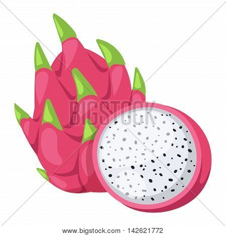 Pitaya or dragon fruit vector tasty nature asian diet delicious. Exotic dragon fruit pink tropical fresh pitaya fruit. Healthy pitahaya cactus pitaya fruit organic nutrition juicy bright dragonfruit.