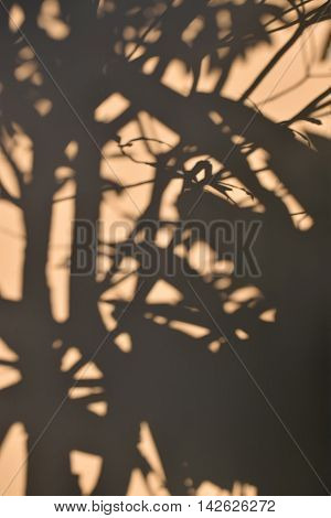 tree shadow on the brown concrete wall background