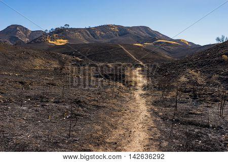 Sand Path Burned Ground