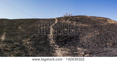 Wildfire Burned Hillside