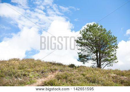 Blue skies, white clouds and a single pine tree on a hilltop