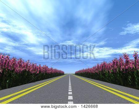 Highway Flowers