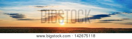 The Panoramic Landscape Of The Eared Ripen Wheat Field Under Scenic Summer Dramatic Sky In Sunset Dawn Sunrise. Skyline.