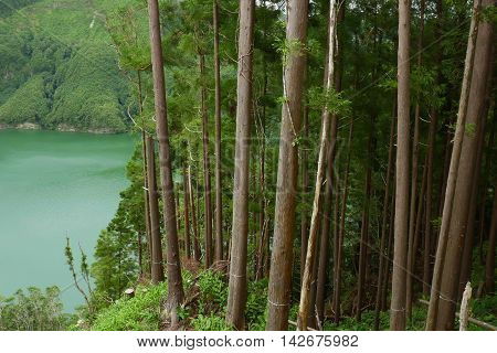amazing beautiful landscape view of green lagoon Lagoa do Rasa or Rasa lake inside a volcano crater next to a tree forest in Sao Miguel island Azores of Portugal in travel destination concept