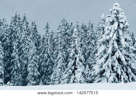 Landscape Scenery Forest In Winter