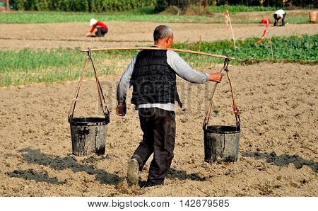 Pengzhou China - December 3 2013: Farmer walking across a field carrying plastic buckets filled with water suspended from a shoulder yoke on his Sichuan province farm (EXCL)
