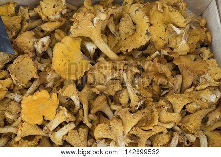 Chanterelles Mushrooms in bulk on a rural market.
