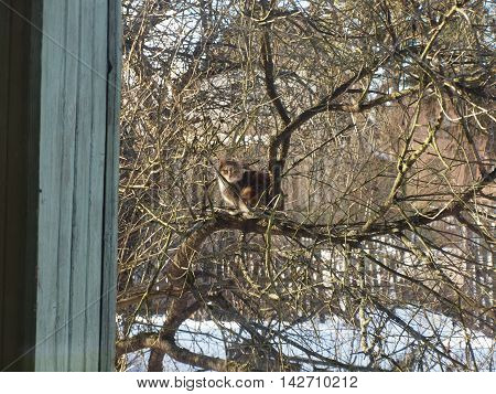 Cat on a tree in an old winter garden.