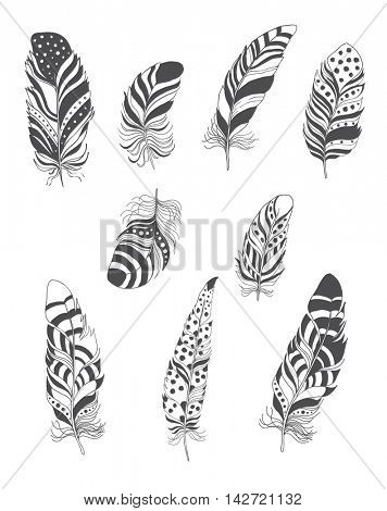 Set of Decorative Bird Feather for Boho Style. Vector.
