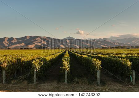 Wither Hills vineyards in Marlborough, New Zealand