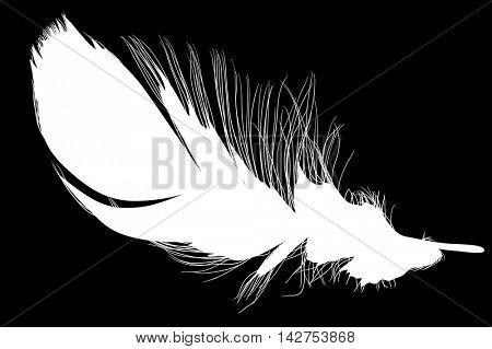 illustration with single black feather on black background