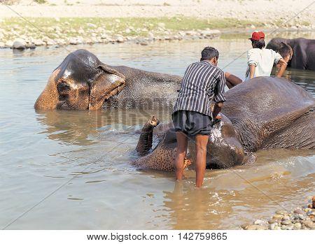 Animals in the wild life