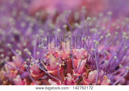 Macro photograph of many small purple and pink flowers.