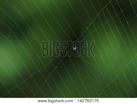 Close up photograph of a tiny insect caught in a spider's web.