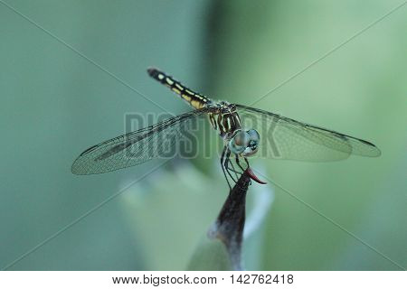 Close-up photograph of a dragonfly on a cactus.