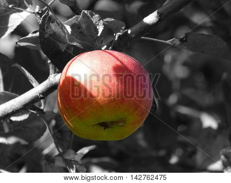 an image in detail with apples and leaves . You can see flavored fruit.