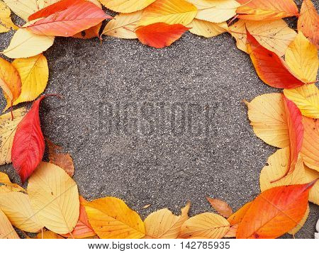 Colorful of dry leaf decoration on the floor background