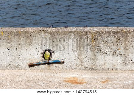 Jetty (pier) from concrete. In the stone hole. Through the breach you can see the flower. In the background water (blurred)