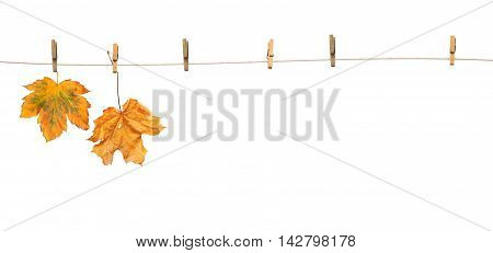 Maple leaves on clothespins with the word autumn isolated on white background