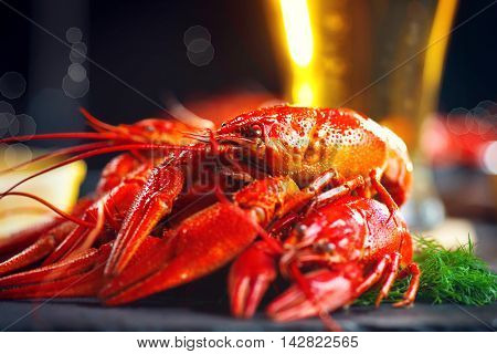 Boiled red crayfish or crawfish with a beer and herbs on a slate rustic table. Close up. Crayfish party