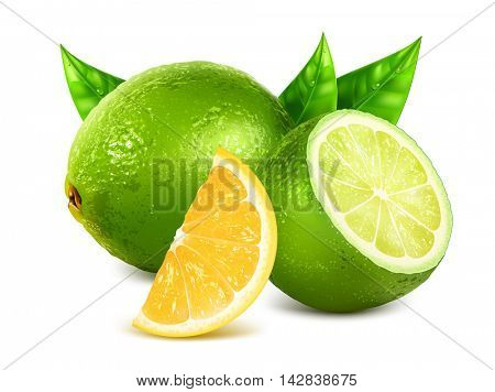 Fresh limes and lemon slice. Fully editable handmade mesh. Vector illustration.