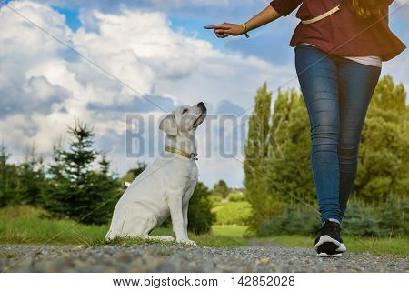 Young woman exercising with a puppy Labrador - education of a dog